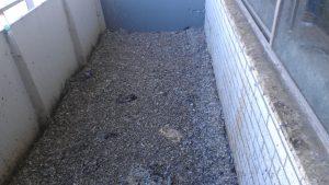 czyszczenie balkonu po gołębiach